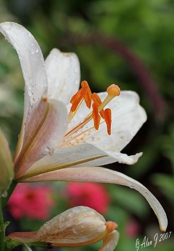 flower canon florida ngc 7d mygearandme 100mmmacrof28lisusm flowerthequietbeauty
