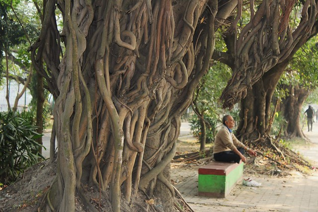 essay on autobiography of a banyan tree Sri maha bodhi is a banyan tree growing in sri lanka it is the oldest  i believe  that the cedar tree deserves to be mentioned in such essay as well these trees .