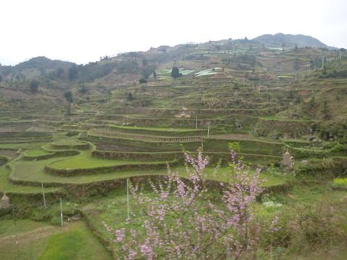 Guizhou13-Kaili-Shiqiao (155)