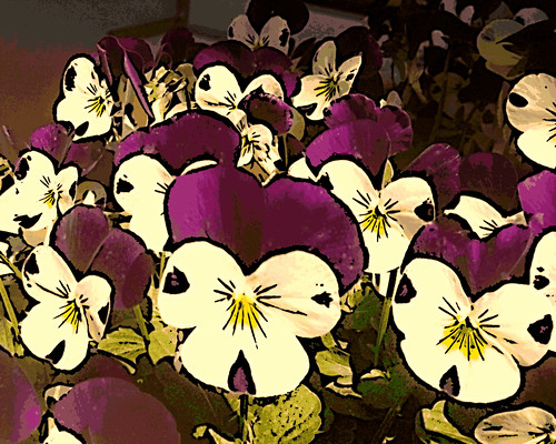Sweet Violas (Digital Woodcut) by randubnick