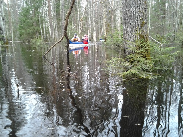 Paddling flooded forest