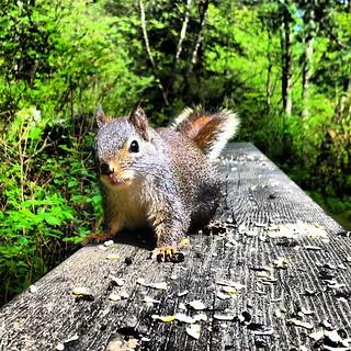 #van4life #vancouver #stanleypark #explorebc #explorecanada #tvvc @cangeo @tourismbc