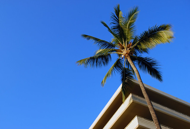 Royal Kona Resort Palm