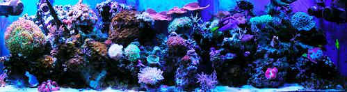 NEW REEF 1