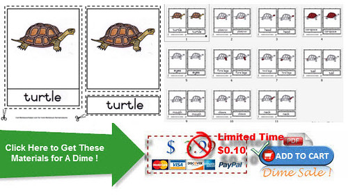 Turtle Day Materials from Montessori Helper
