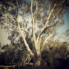 Home among the gum trees.......