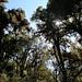 Trees with moss - Árboles cubiertos con musgo; Región Mixes, Oaxaca, Mexico por Lon&Queta