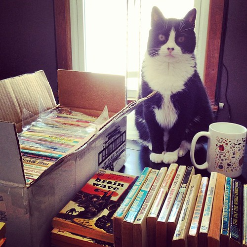 Oliver is collecting vintage sci-fi books. Oh, the hobbies #cats have... #books