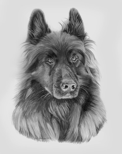 The gallery for --> Realistic German Shepherd Drawing