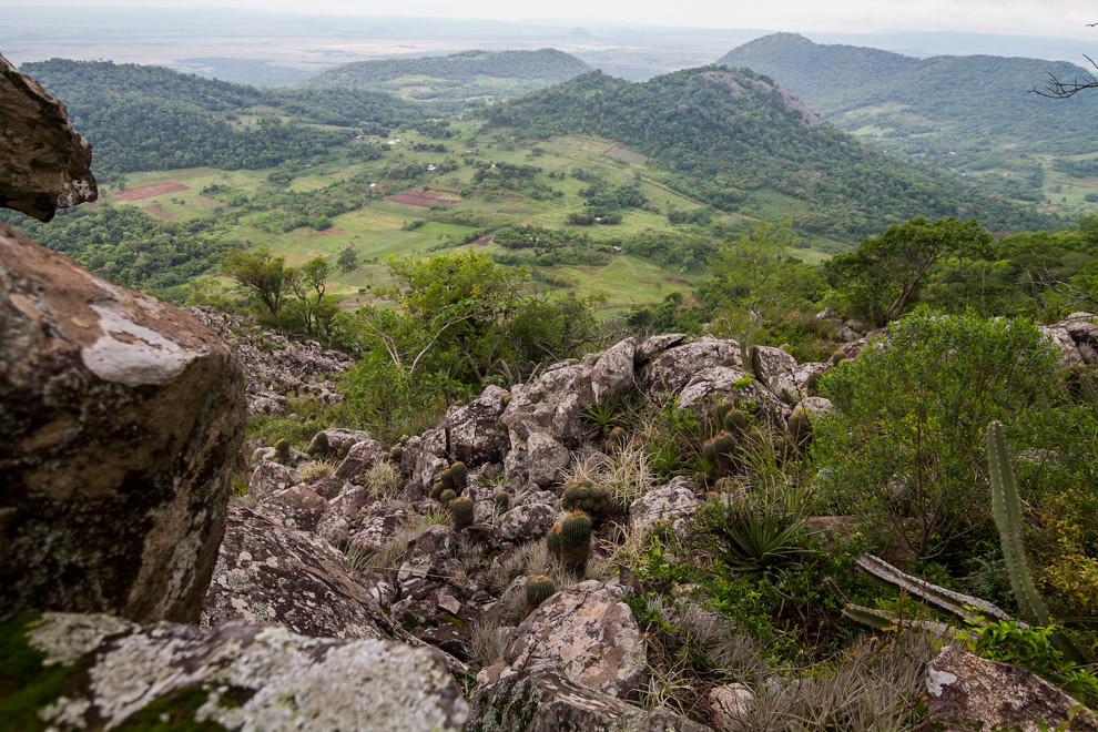 La vista desde la cima del Cerro Acahay, donde se observa una vegetación con cactus de varias especies. (Tetsu Espósito)