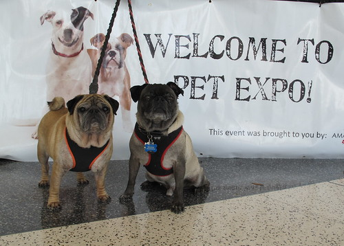 At the Pet Expo!