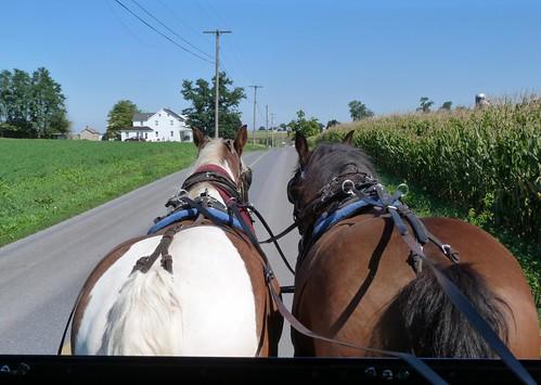 Subido en un carro de caballos para recorrer territorio amish en Lancaster County
