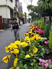お花ととらちゃん 2013/4/21