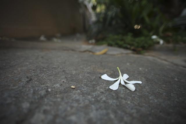 Indiranagar Flower