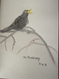 Mr Peaberry drawn from photo