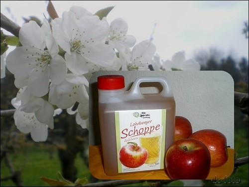 Frankfurt Lohrberg :: Apfel-Blütenfest