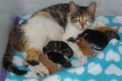 Catsparilla & Babies