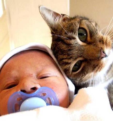 Hilarious Babies & Cats