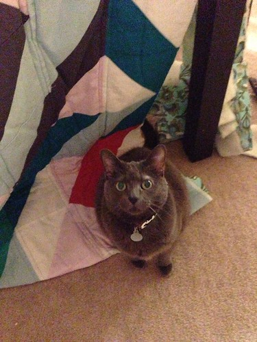 """Helping"" me trim the quilt"