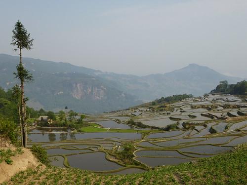 Yunnan13-Yuanyang 2 (5)