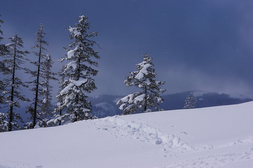 winter snow mountains tree nature forest outside elements