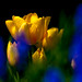 Golden light in a sea of blue and green by Steve-h