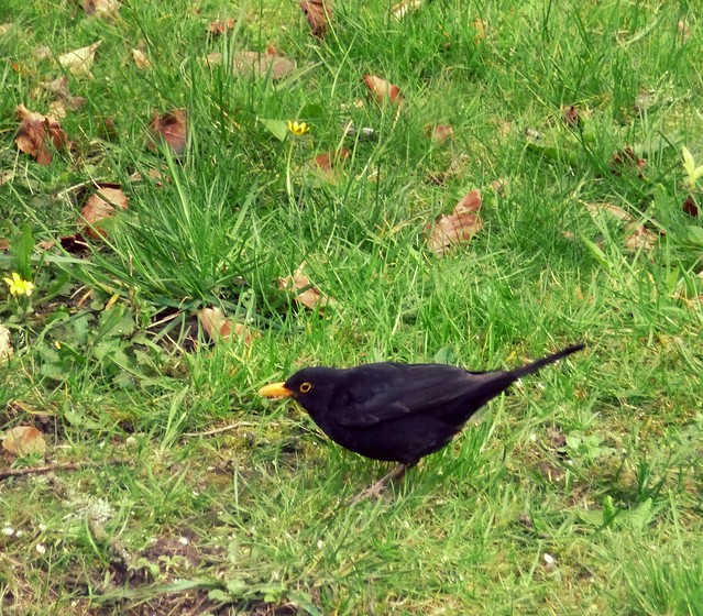 Birds in our Garden