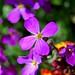 Purple Flower by DaveJC90