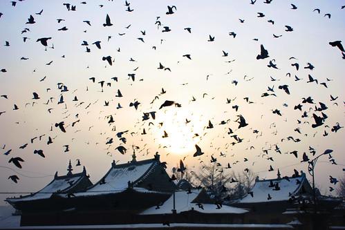 travel winter birds fog sunrise vodkatrain mongolia transsiberian ulaanbaatar 2013 gandantegchinlenmonastery ruskihuski