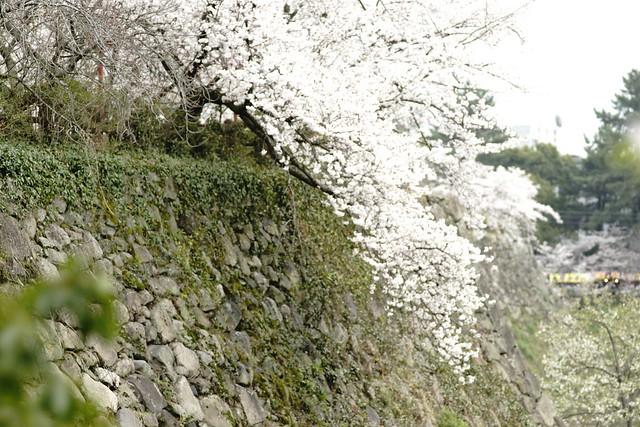 [url=https://www.flickr.com/photos/... 郡山城 こおりやま