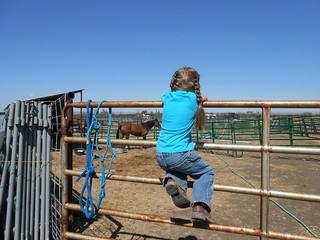 Moving North Star Horsemenship Day 2- Trip 2 horses settling (32)