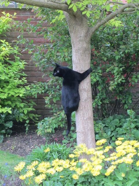 May garden 2013 007