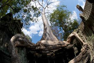 [SIEM REAP] :: Angkor : 02