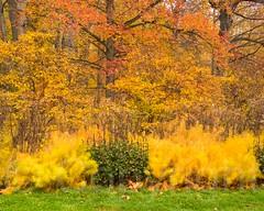 Foliage at the New York Botanical Garden, Bronx, New York City