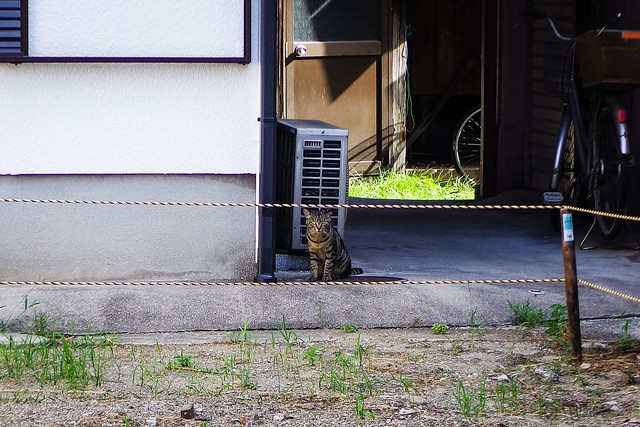 Today's Cat@2016-08-21