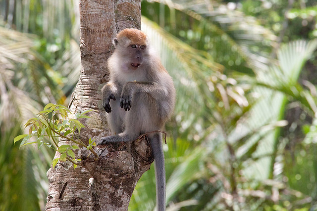 essay on monkey beach Below is a free excerpt of character analysis: lisamarie hill monkey beach from anti essays, your source for free research papers, essays, and term paper examples.