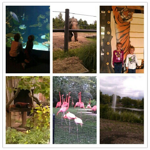 Busy but fun day at the zoo #ColumbusZoo #summertime