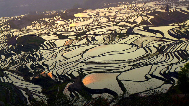 Sunrise at DuoYiShu Rice Terraces, China 多依树日出