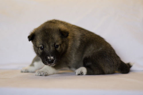 Ike-Kilbe-Pup5-Female(Day 22)-2