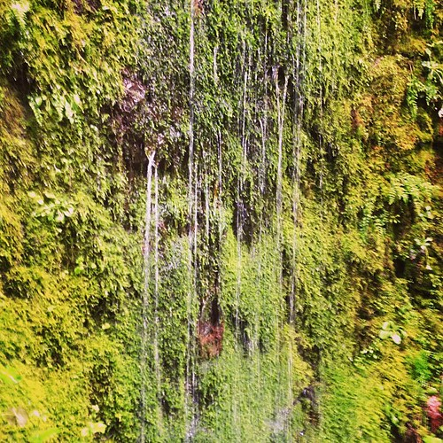 Dripping moss wall