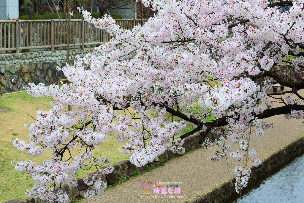 2013-04-02-13h05m58IMG_0436