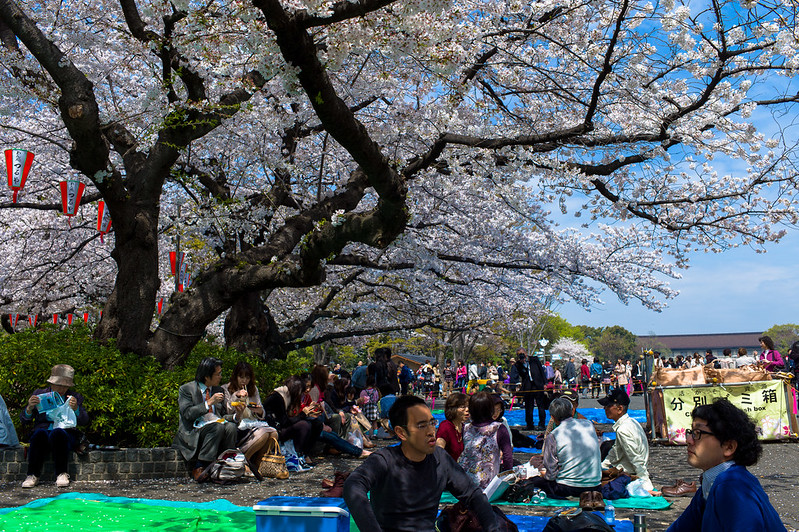 Hanami parties are everywhere during Sakura season in Ueno Park.