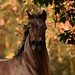A Horse by ♞Jenny♞