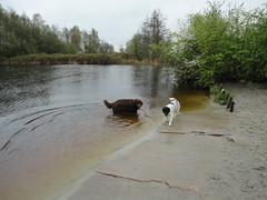 Hondenstrand Reeuwijk 4