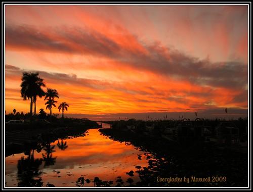 sunset orange sun water soleil florida snake south alligator coucher palmtree heat everglades serpent chaud palmier sud