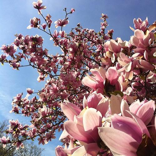 Låg och solade under ett magnoliaträd i en timme. Med nakna fötter i gräset.