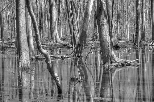 blackandwhite reflections april fecundity comingbacktolife tinkerpark