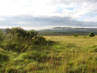 The plains of Masai Mara