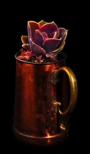 plants nature mug brass softbox succulents homestudio manualmode offcameraflash tabletopphotography honlsnoot yn560 yongnuorf603n strobie130