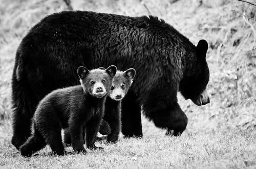 2013 05 17 Bears